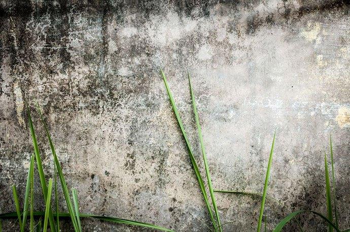 black mildew on grass